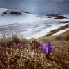 Disgelo su Alpi ed Appennini, sbocciamo i meravigliosi Crocus