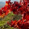 Puglia e Basilicata: primi brividi autunnali! 9° sul Gargano, 7° a Potenza!