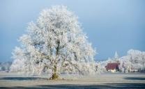 L'inverno si farà vivo durante la prossima settimana sull'Italia.
