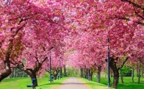 Autunno in ritardo : Primavera in anticipo