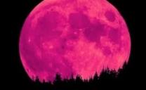 "Stasera un'eclissi di luna penombrale detta ""luna delle rose"" o ""luna di fragola"""