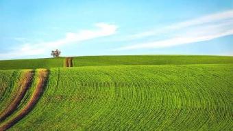 Palouse: la Toscana d'America