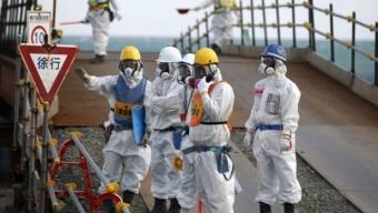 """Per secoli dei secoli: il disastro di Fukushima provoca numerose """"mutazioni genetiche"""""""
