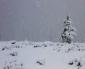 La Neve conquista Yellowstone: che meraviglia!