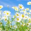 Dal prossimo weekend ci sarà un anticipo di primavera su gran parte dell'Europa
