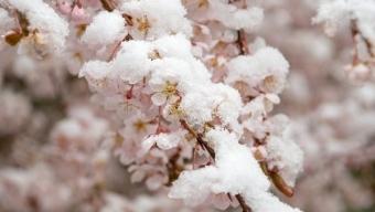 Possibile fase fredda ad inizio della prossima settimana?