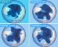05 gennaio 2021…la fisionomia di lungo termine possibile del vortice polare…