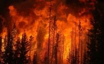 Incendi Piemonte, rogo sulle colline del Vergante: Vigili del Fuoco sul posto e lanci dall'elicottero
