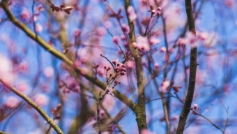 MARZO: mese di Primavera, ma spesso travestito da Inverno