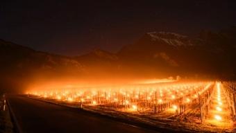 Gelo fuori stagione in Svizzera: Candele accese nei vigneti