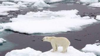 Il declino del ghiaccio artico.