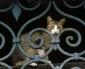 Variante Inglese, Primo caso, su un Gatto in Provincia di Novara